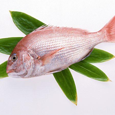 鯛の美味しい時期となりました