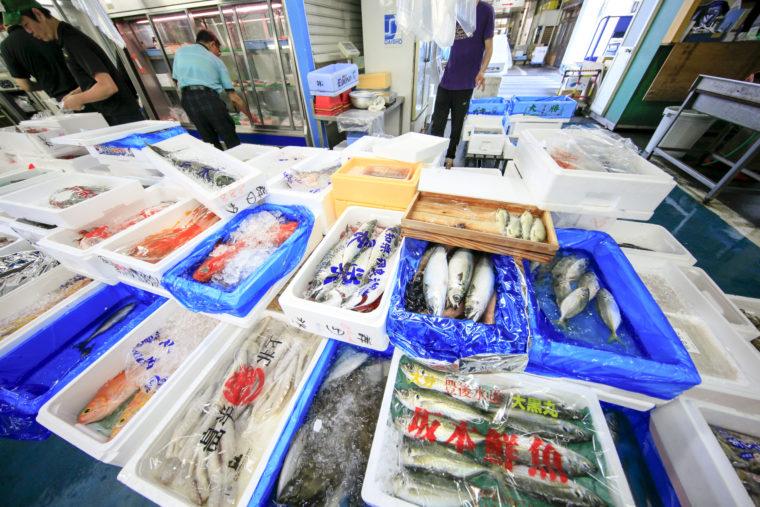 熟練の目利きが魚を見極めています