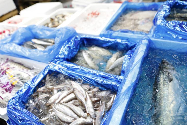 マグロから料亭で使う「はも」など特殊活魚も扱っています