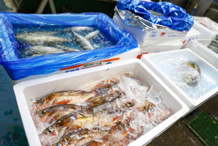 旬の魚を食べていただきたい